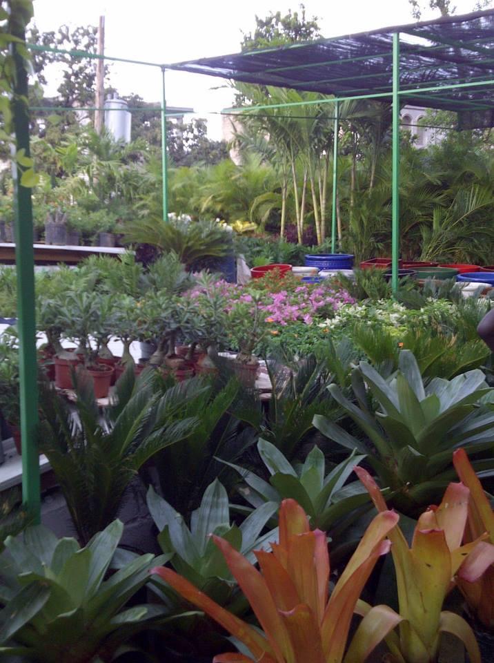 Frantz le jardinier for Service jardinier