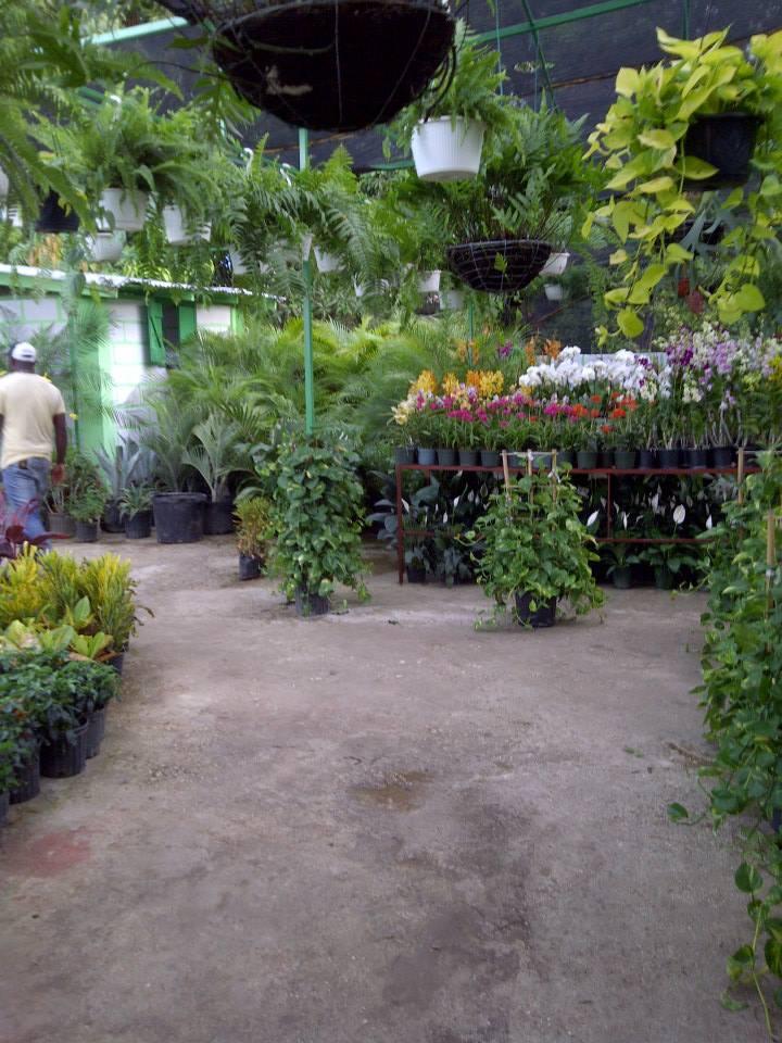Frantz le jardinier for Jardinier entretien jardin