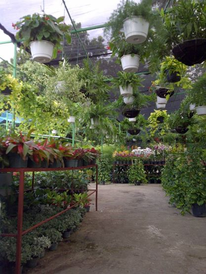 Frantz le jardinier for Le jardinier