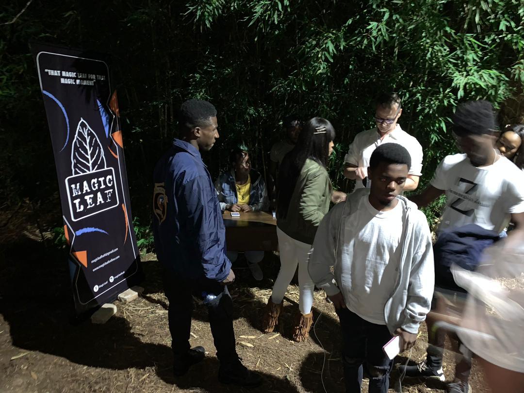 Magic Leaf Haiti - Organic Whole Leaf Tobacco For Sale