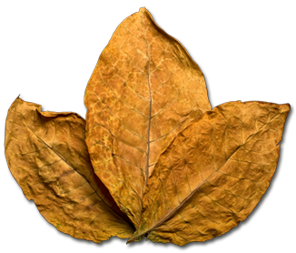 Tobacco Leaf Png - More info