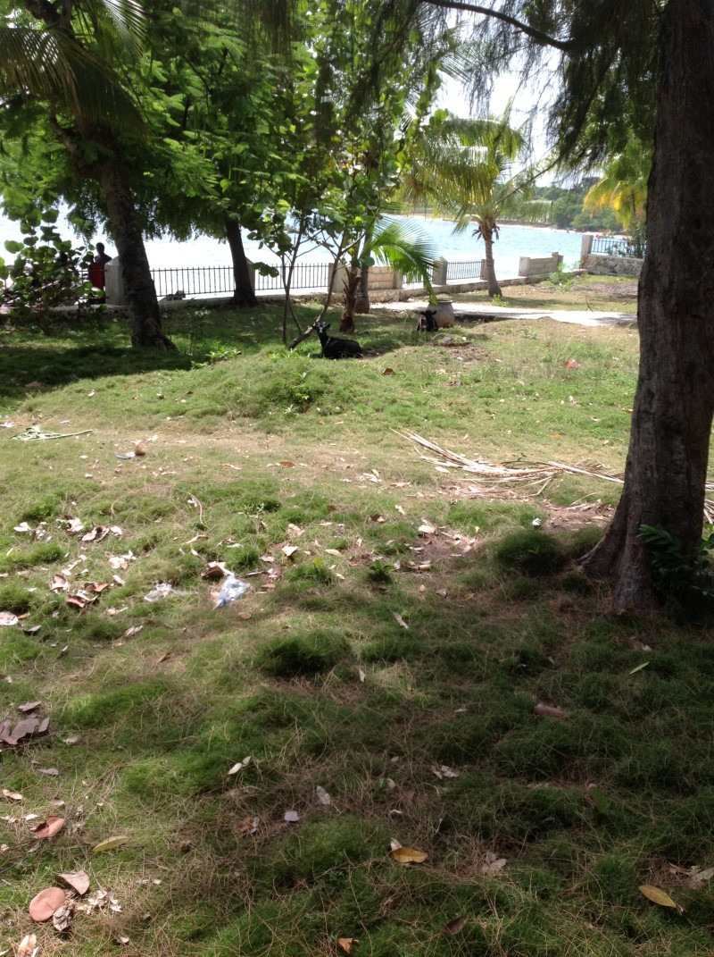 Beachfront Property at Grand Goave 5,805 m2