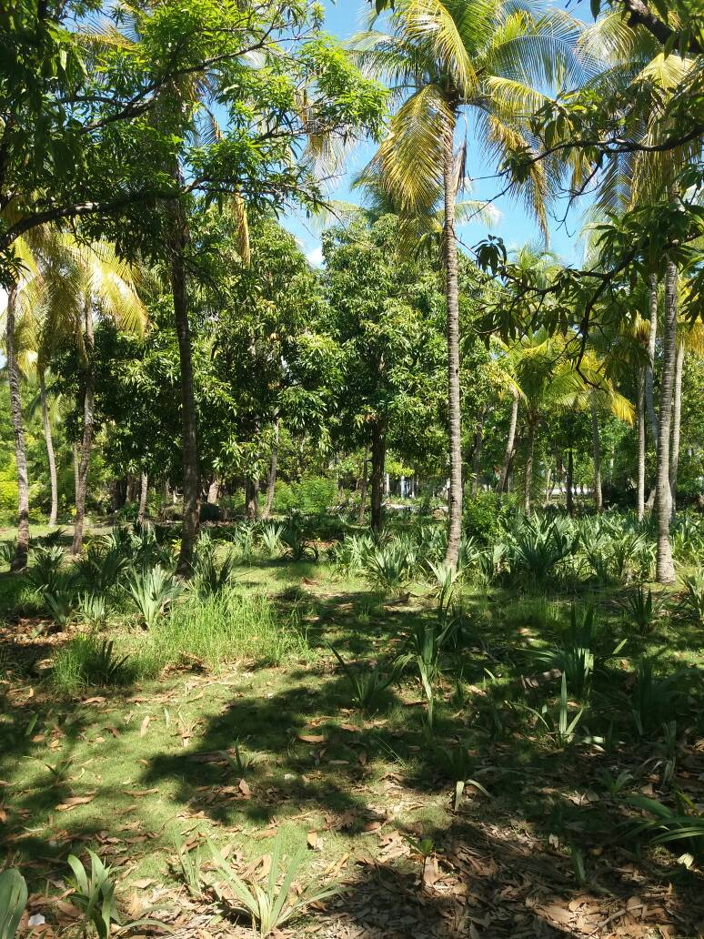 6,000 m2 Plot of Beachfront Land at Montrouis with Unfinished/Under Construction Home