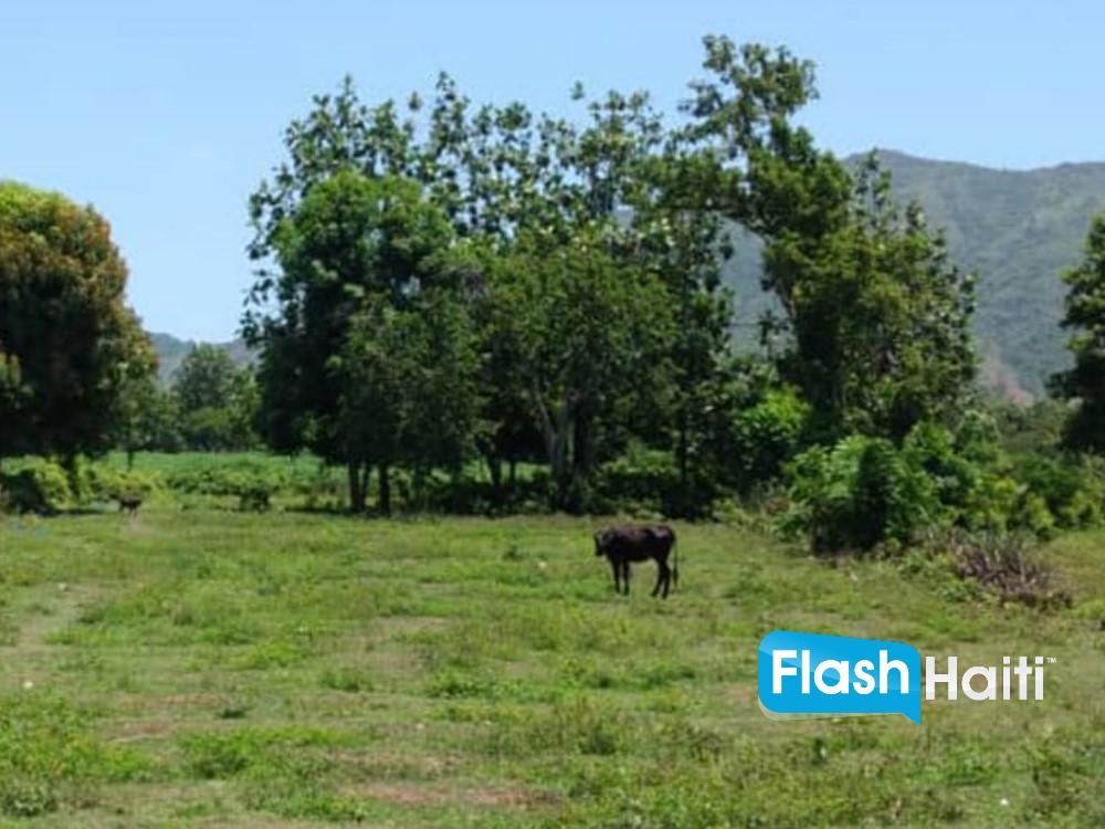 Terrain à vendre à Morne Rouge, Cap-Haïtien