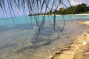 2.3 Acres Of Beachfront Property In Port Salut, Cayes