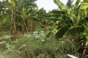 Land near Jeremie in Buvette