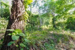 1 Acre Land at Musseau, Bourdon